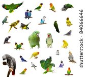 set parrots and parakeets... | Shutterstock . vector #84066646