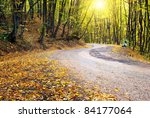 Road In Autumn Wood. Nature...