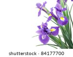 Dutch Iris On A White Background