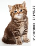 Stock photo british kitten on white background 84195199