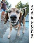 cute dog at a swimming pool - stock photo