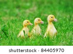 Three Ducklings On The Grass