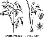 plants | Shutterstock .eps vector #84462439