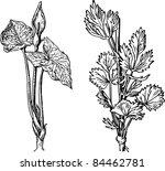 plants | Shutterstock .eps vector #84462781