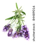 one bunch of fresh lavender on... | Shutterstock . vector #84489016