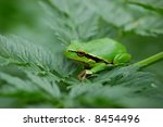 three frog | Shutterstock . vector #8454496