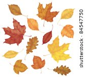 Various Autumn Leaves Isolated...