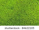 Green Moss Background . Star...