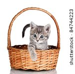 Stock photo beautiful gray kitten in basket isolated on white 84744223