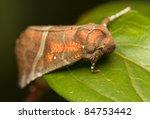 scoliopteryx libatrix | Shutterstock . vector #84753442