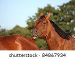 brown horse scratching another...   Shutterstock . vector #84867934