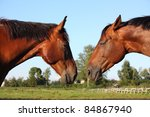 two brown horses looking at... | Shutterstock . vector #84867940