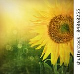 Abstract floral background with sunflower in the garden and sunlight rays with bokeh lights in the back. - stock photo