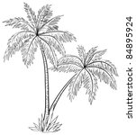 Vector  Palm Trees With Leaves  ...