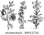 plants | Shutterstock .eps vector #84911716