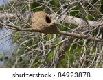 rufous hornero's home at... | Shutterstock . vector #84923878