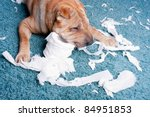 Stock photo sharpei dog with toilette paper 84951853