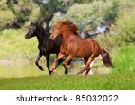 Two Horses Galloping In The...