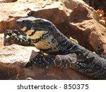 goanna at renmark   Shutterstock . vector #850375