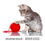 Stock photo funny gray kitten and ball of thread isolated on white 85051522