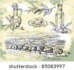 olive oil   Shutterstock .eps vector #85083997