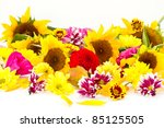 many beautiful fall colors on a white background - stock photo