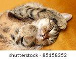 Stock photo tabby sweet sleeping on the bed 85158352