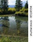 reflection of spruce in quiet... | Shutterstock . vector #8518558