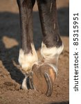 Close Up Of Horse Hoof With...