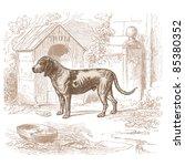 Dog   Vintage Engraved...