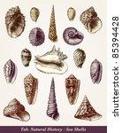 Seashells   Vintage Engraved...