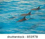 dolphins in the sea | Shutterstock . vector #853978