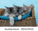 Stock photo three kittens sleeping on a chair 85415923