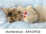Stock photo  cat sleeps holding a toy mouse 85415926