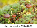 Tiny mushrooms amongst lichenes and mosses on an old stamp - stock photo