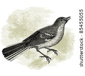 Northern Mockingbird   Vintage...