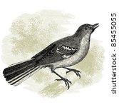 Northern Mockingbird   Vintage...