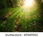 Magical Light On A Footpath In...