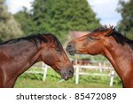 two brown horses playing with... | Shutterstock . vector #85472089