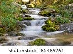 Forest Stream Running Over...