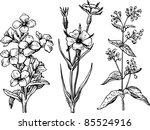 plants | Shutterstock .eps vector #85524916