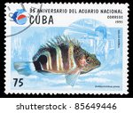 Small photo of CUBA - CIRCA 1995: A Stamp printed in CUBA shows Amblycirrhitus pinos, circa 1995