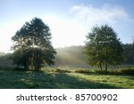 Meadow, tree and sunlight - stock photo