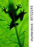 frog resting on a leaf | Shutterstock . vector #85722193