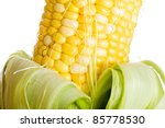 Farm fresh corn on the cob. - stock photo