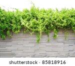 The Beautiful Decorative Plant...