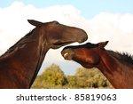two brown horses fighting | Shutterstock . vector #85819063