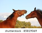 two brown horses fighting | Shutterstock . vector #85819069