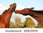 two brown horses fighting   Shutterstock . vector #85819093
