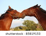 two brown horses fighting | Shutterstock . vector #85819153